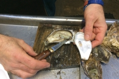 Fresh Oysters on Skye